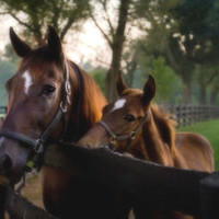 Lexington Horse Farm Tours